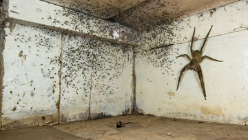 'The spider room'. Winner. Category: Urban wildlife.