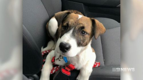 The teenager said she had tried to save her dog from the car when the men tried to steal it, but the pet was stuck inside the vehicle because of its lead. Picture: 9NEWS.