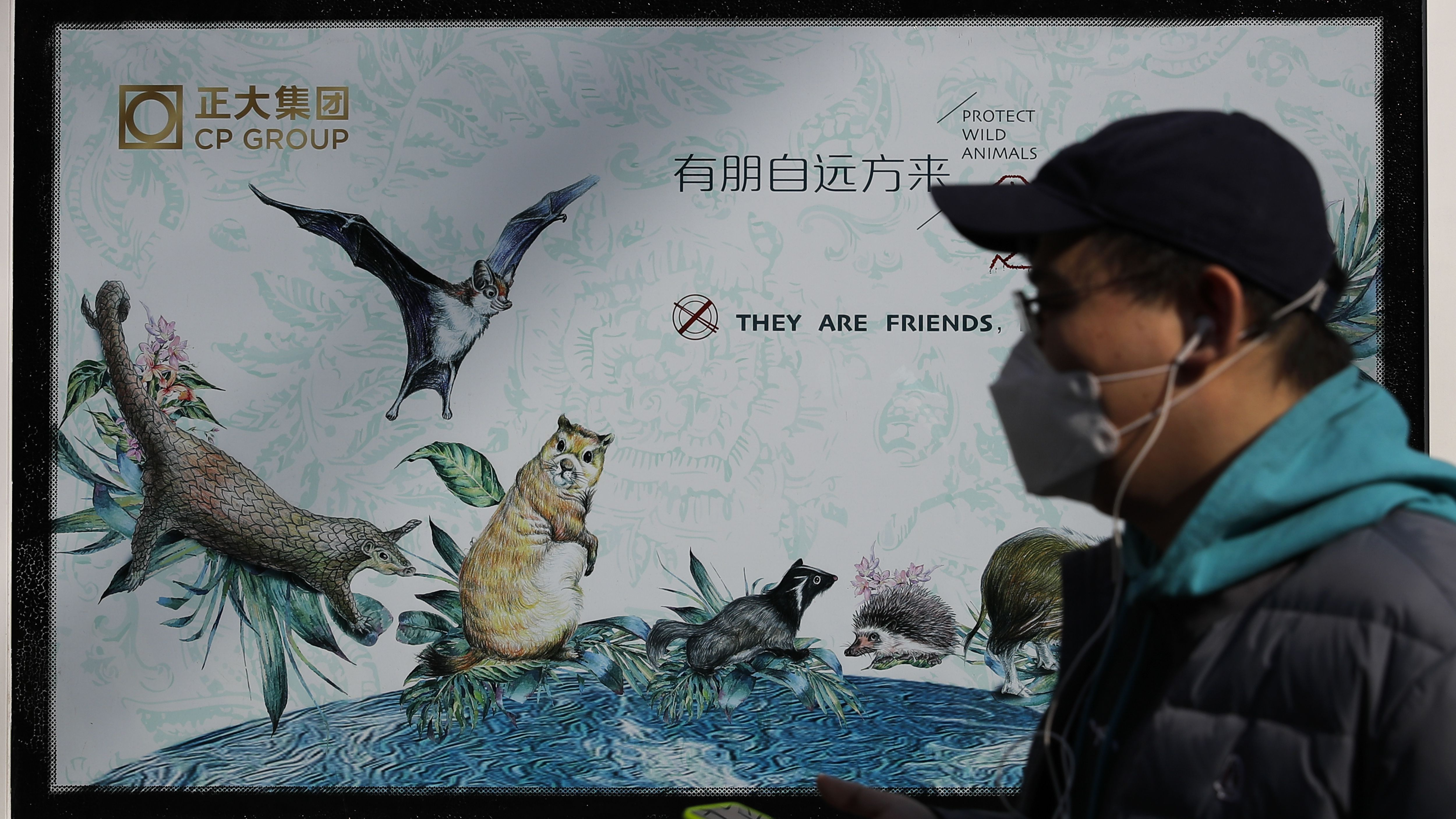 Shenzhen becomes first Chinese city to ban consumption of cats and dogs