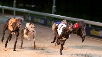 Government's $500k greyhound race grant 'taxpayer-funded apology'