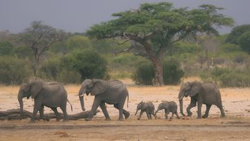 Elephants in Hwange national park, near where the animals were found dead.