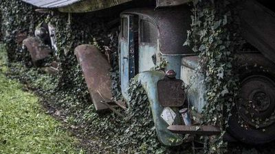 Ivy grows over the Baillon car collection, which was abandoned 50 years ago. (AP)