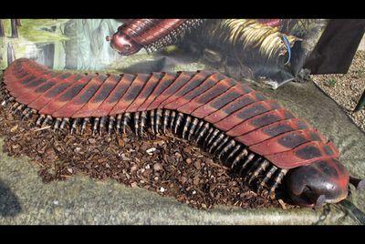 Humungous millipede