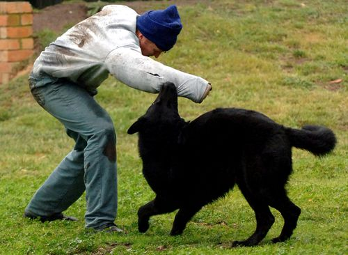One of the dog squad pooches had to be euthanased. (AAP File)