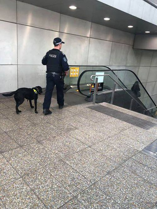 NSW Police officer and drug dog wait at the top of an escalator inside at train station.