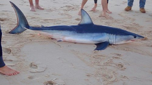 Selby said the shark's death is a 'sad outcome' because it had become the victim of a fishing hook. Picture: Supplied.