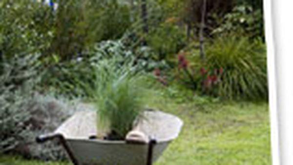 The Aussie backyard - barren to beautiful