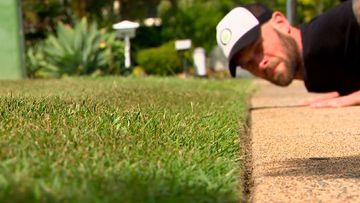 Lawn Fanatics share their secrets for a perfect turf
