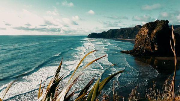 Image: westauckland.net.nz