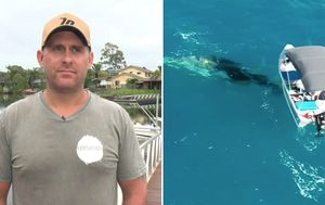 Gold Coast whale rescuer 'Django' to donate fine fund to conservation group