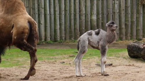 Both mum and Louis are doing well. (Blackpool Zoo)