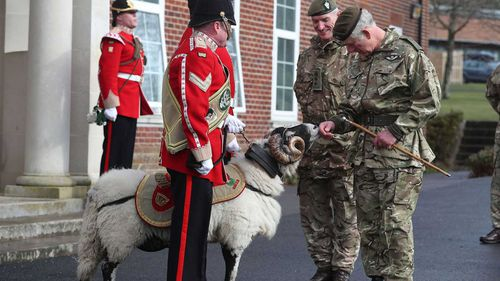 Prince Charles greets a ram at a military ceremony in Salisbury. (AAP)