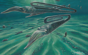 Ancient squid-like creature found to have lifespan of 200 years