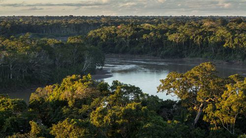 To find help in the dense Amazon rainforest, Juliane Koepcke found a river and headed downstream.