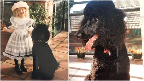 Buster was my family's first Standard Poodle.