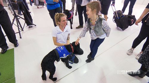 After a stint at the airport, the dogs will be placed permanently with people who need them.
