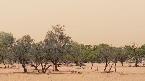 The dust storm rolls past a property between Wilcannia and Cobar.