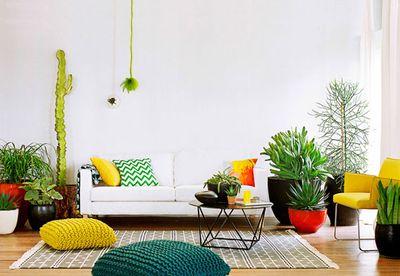 Modern cacti