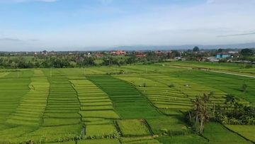Bali's famous rice paddies are under threat as farmers sell to developers.