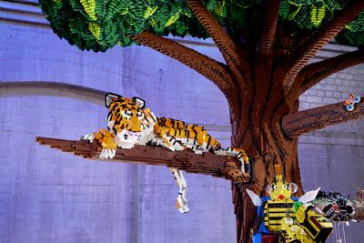 Tiger In A Tree | Out On A Limb Challenge