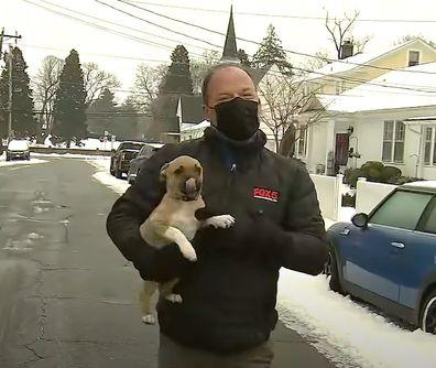 Puppy interrupts fox news broadcast