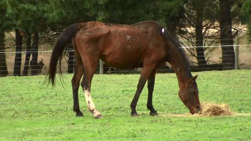 More than a dozen starving horses seized from Victorian farm