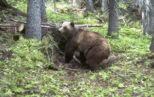 US woman chased and attacked by bear while comet-watching