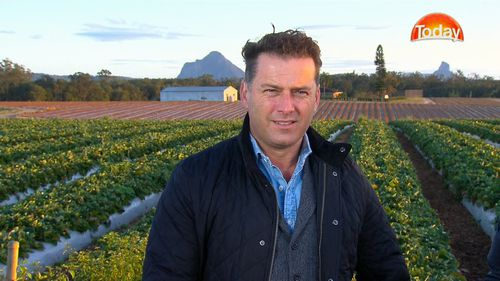 Today Show's Karl Stefanovic visited a family strawberry farm in Wamuran this morning.