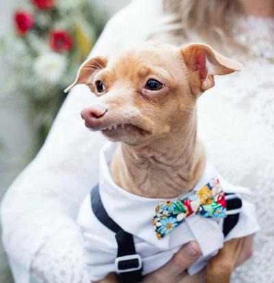 Tuna the dog (2.1 million followers on Instagram)