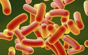 Salmonella outbreak victim demands answers from hospital bed
