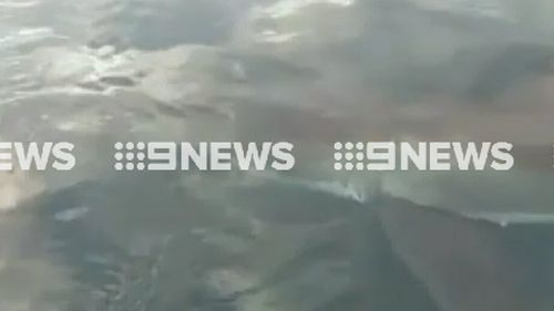The shark left a few bite marks on the boat. (9NEWS)