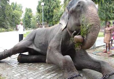 Elephant weeps after being freed