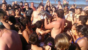 The baby dolphin is surrounded by a crowd of beachgoers, unprotected from the hot sun.