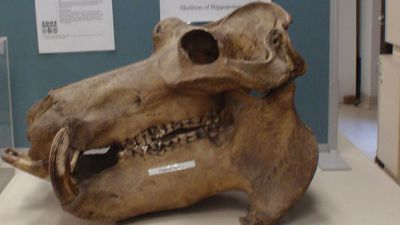 Rare animal skeletons stolen from Sydney University