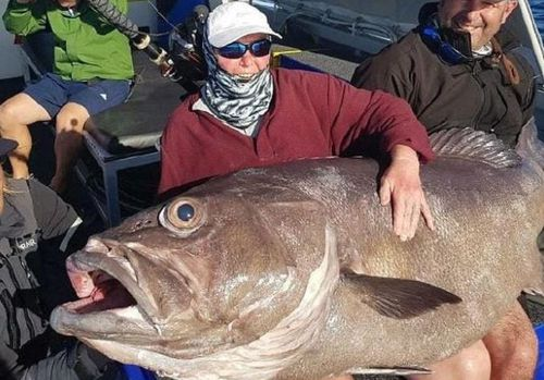 The 62kg bass grouper took 40 minutes to reel in. (Facebook / Reel Force Charters)