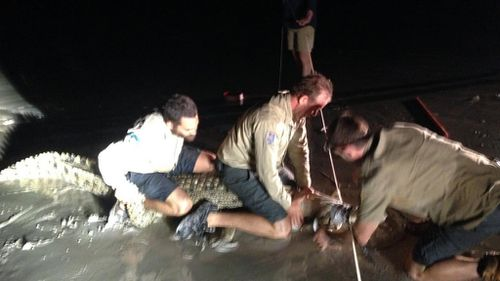 One crocodile was caught in the early morning. One crocodile was caught in the early morning. (WA Department of Parks and Wildlife)