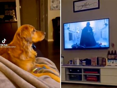 Good boy's hilarious reaction to meeting Darth Vader for the first time