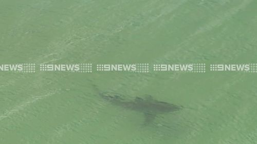 Kill order issued for 4m shark that attacked NSW bodyboarder