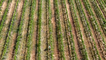 The Hunter Valley wine district in NSW is expected to struggle in its fourth consecutive year of drought with conditions expected to worsen.