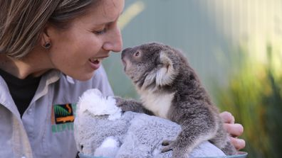 """""""Tippi"""" is the eldest of six confirmed joeys this year and had her first health check this week. This adorable news being much needed with Greater Sydney in the midst of a COVID lockdown."""