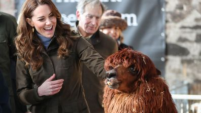 Kate Middleton, Duchess of Cambridge has an encounter with an Alpaca during a visit to The Ark Open Farm on February 12, 2020 in Newtownards, Northern Ireland.