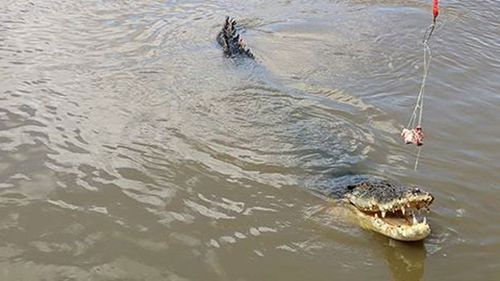 The huge salt water crocodile's body has been found after an apparent boating accident.