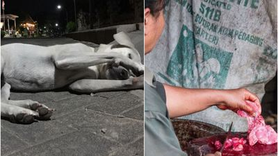 The grisly truth behind Bali's dog meat industry