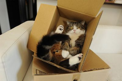 Maru, from Japan, loves boxes.