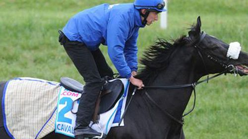 Cavalryman before being scratched. (9NEWS)