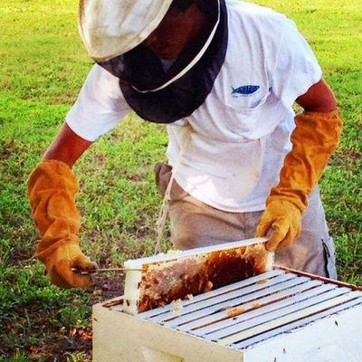 He's a beekeeper