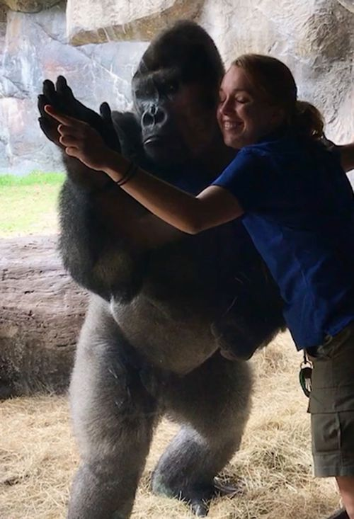 Bolingo and Animal Care Specialist Rachel Hale finish training with a hug. (Busch Gardens Tampa Bay)