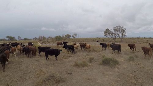 The heaviest falls were in the state's north-west with towns like Inverell, Moree and Narrabri all receiving above 20 millimeters.