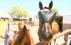Western Australia introduces horse 'passports' to improve racehorse welfare