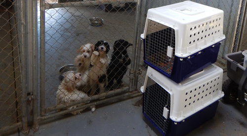 News Victoria: puppy seller convicted banned for two-years